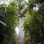 カオリツリー